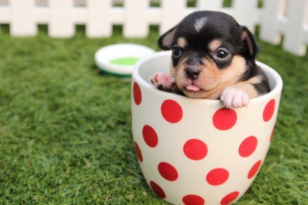 Los mejores consejos, recomendaciones y pautas para educar y tratar a un perro adoptado zona de comida