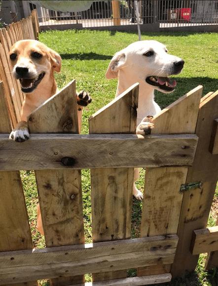 Los mejores consejos, recomendaciones y pautas para educar y tratar a un perro adoptado refugio