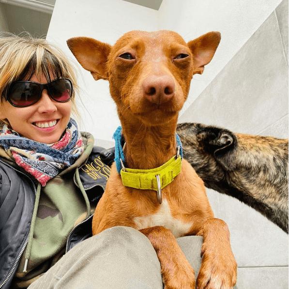 Los mejores consejos, recomendaciones y pautas para educar y tratar a un perro adoptado felicidad