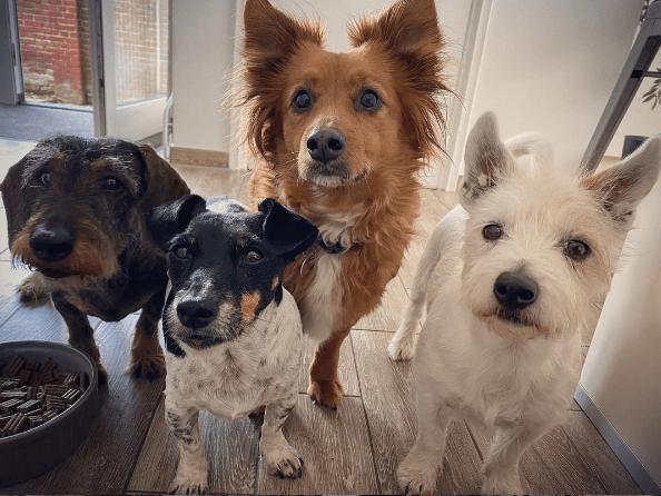 Los mejores consejos, recomendaciones y pautas para educar y tratar a un perro adoptado compañía