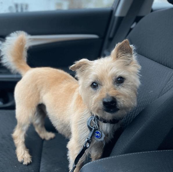Los mejores consejos, recomendaciones y pautas para educar y tratar a un perro adoptado correa