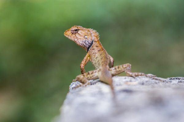 Los mejores nombres para iguanas información