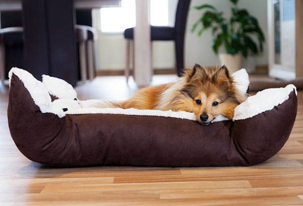 Por que mi perro rasca su cama 4