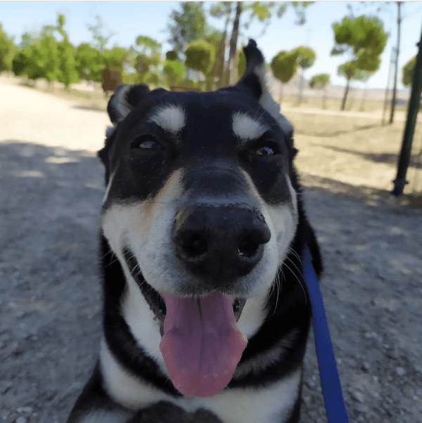 Golpes de calor en perros: qué es, síntomas, tratamiento y peligros sombra