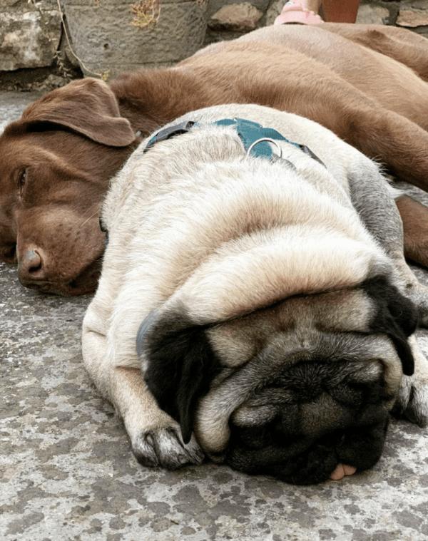 Golpes de calor en perros: qué es, síntomas, tratamiento y peligros suelo