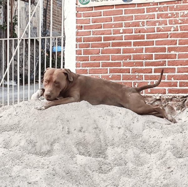 Golpes de calor en perros: qué es, síntomas, tratamiento y peligros razas