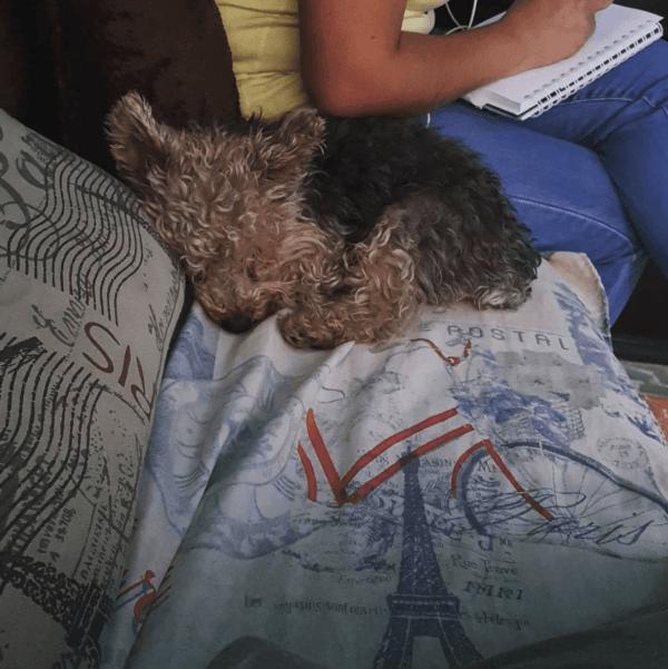 Golpes de calor en perros: qué es, síntomas, tratamiento y peligros mareo