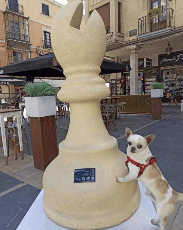 Golpes de calor en perros: qué es, síntomas, tratamiento y peligros agua