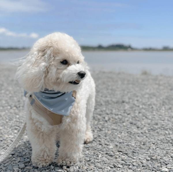 Golpes de calor en perros: qué es, síntomas, tratamiento y peligros playa