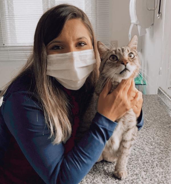 Golpes de calor en gatos: qué es, síntomas, tratamiento y peligros veterinaria