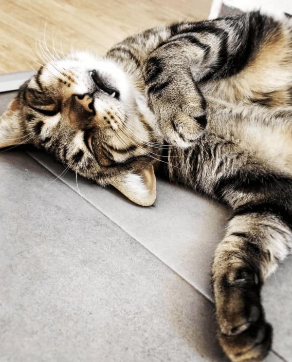 Golpes de calor en gatos: qué es, síntomas, tratamiento y peligros temblores