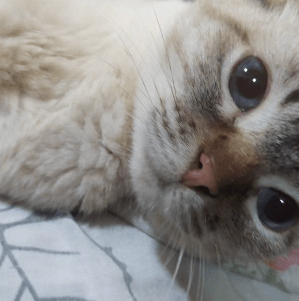 Golpes de calor en gatos: qué es, síntomas, tratamiento y peligros mucho sol