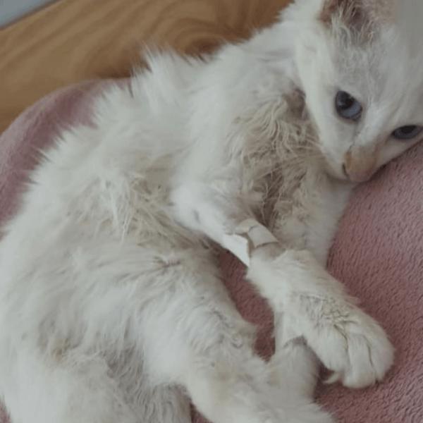 Golpes de calor en gatos: qué es, síntomas, tratamiento y peligros dolor
