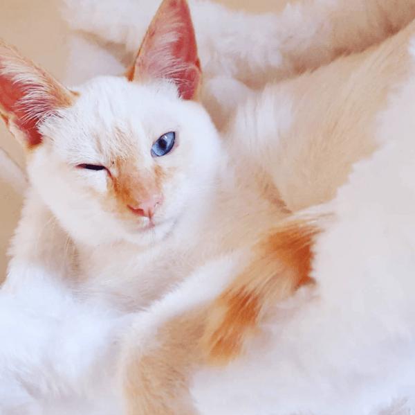 Golpes de calor en gatos: qué es, síntomas, tratamiento y peligros