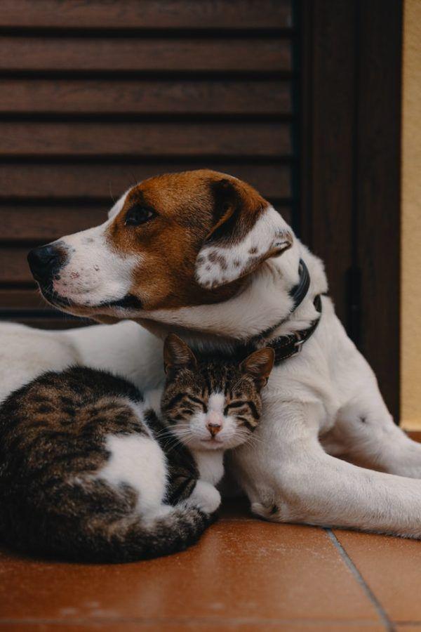 Las claves y los mejores consejos para la convivencia entre los perros y los gatos