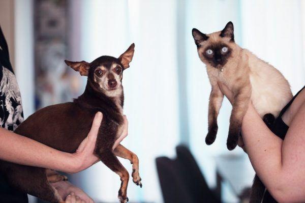 Las claves y los mejores consejos para la convivencia entre los perros y los gatos presentación