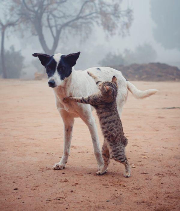 Las claves y los mejores consejos para la convivencia entre los perros y los gatos juegos