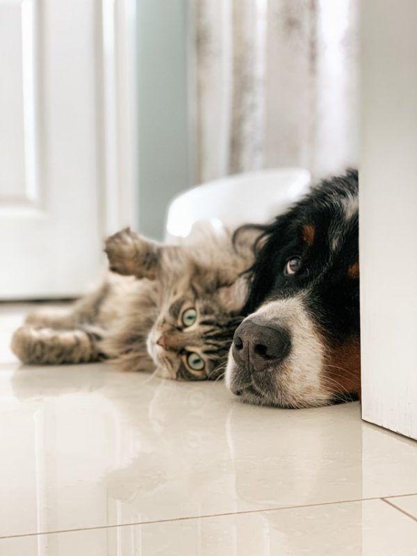 Las claves y los mejores consejos para la convivencia entre los perros y los gatos convivencia