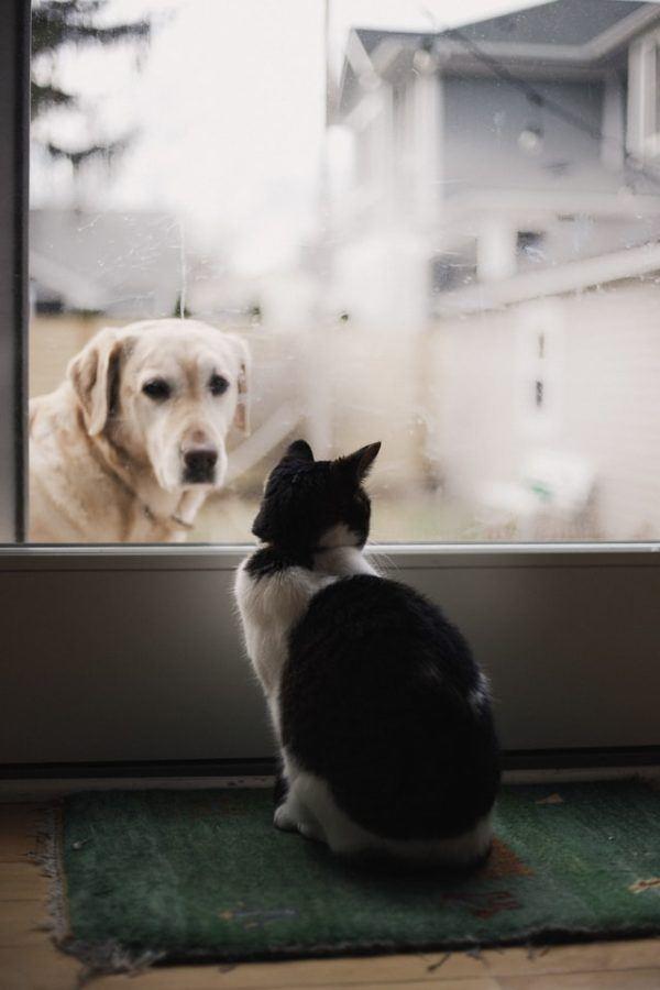 Las claves y los mejores consejos para la convivencia entre los perros y los gatos salidas