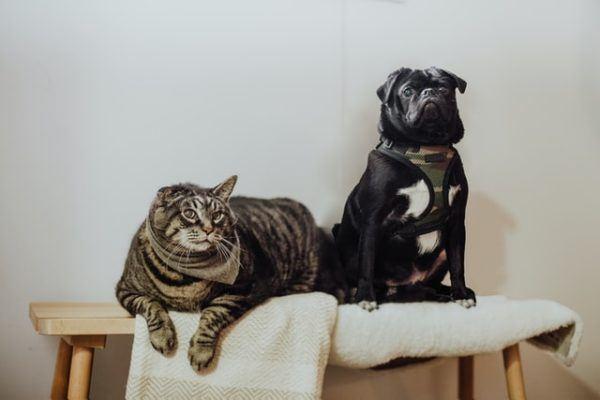 Las claves y los mejores consejos para la convivencia entre los perros y los gatos zonas altas