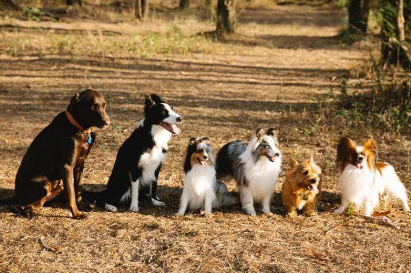 Las mejores razas de perros para el verano