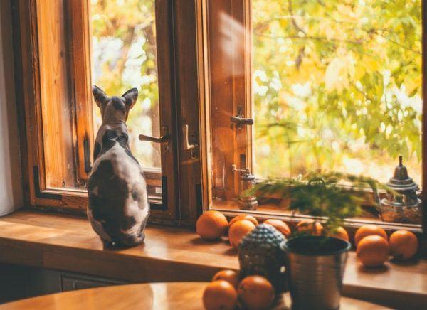 Las razas de gato que mejor soportan el calor del verano Sphynx