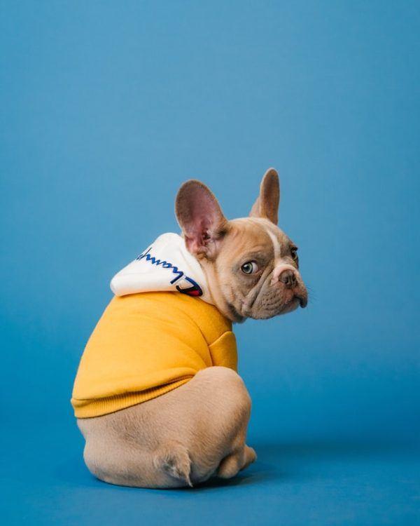Cómo hacer un abrigo para nuestros perros Champion