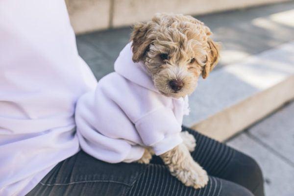 Cómo hacer un abrigo para nuestros perros a juego