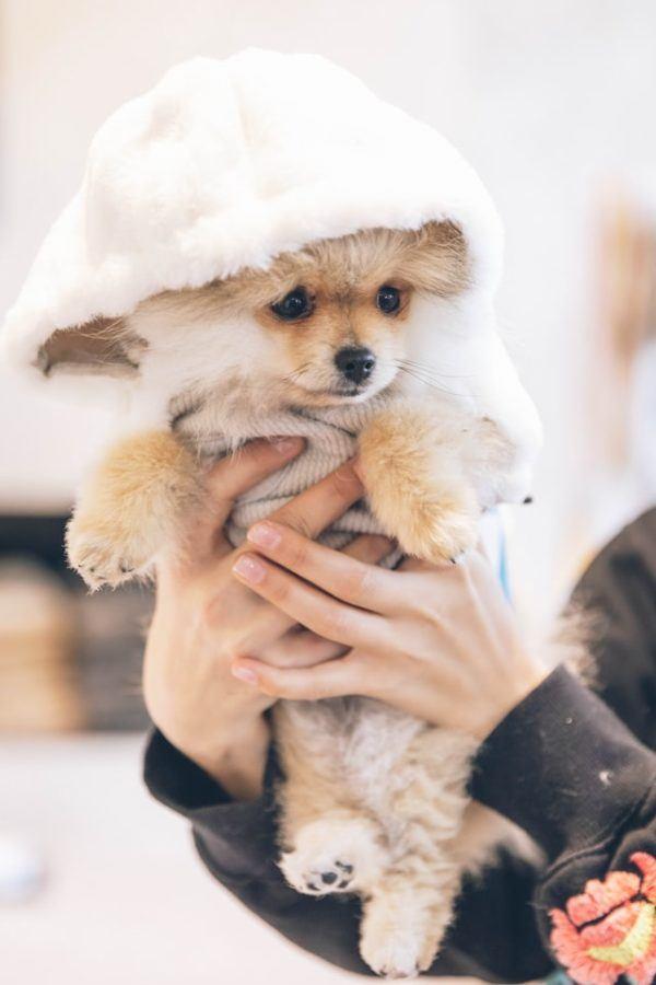 Cómo hacer un abrigo para nuestros perros borrego