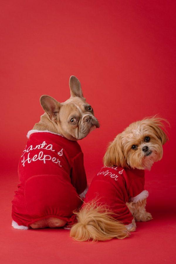 Cómo hacer un abrigo para nuestros perros Navidad