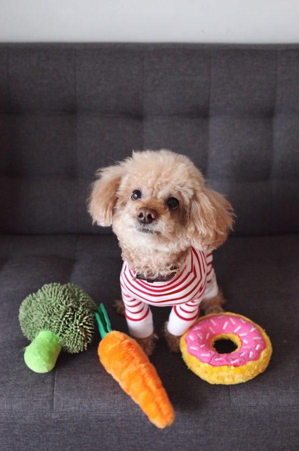 Cómo hacer un abrigo para nuestros perros rayas rojas