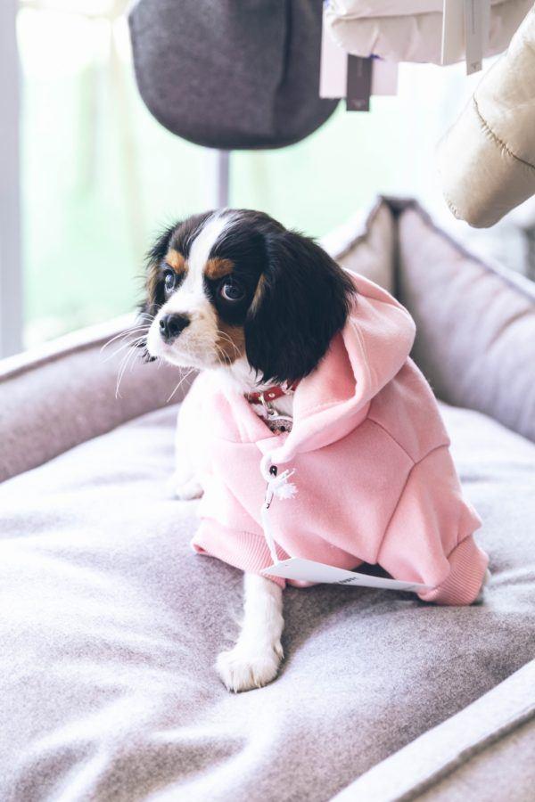 Cómo hacer un abrigo para nuestros perros sudadera rosa