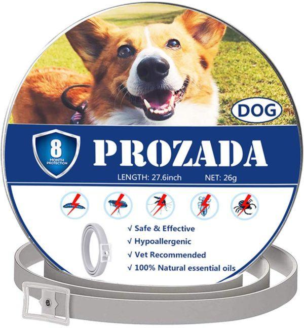 Los mejores y más efectivos collares antiparásitos para perros Prozada