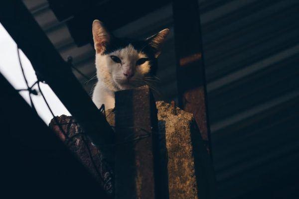 Los 10 trucos más inteligentes para gatos