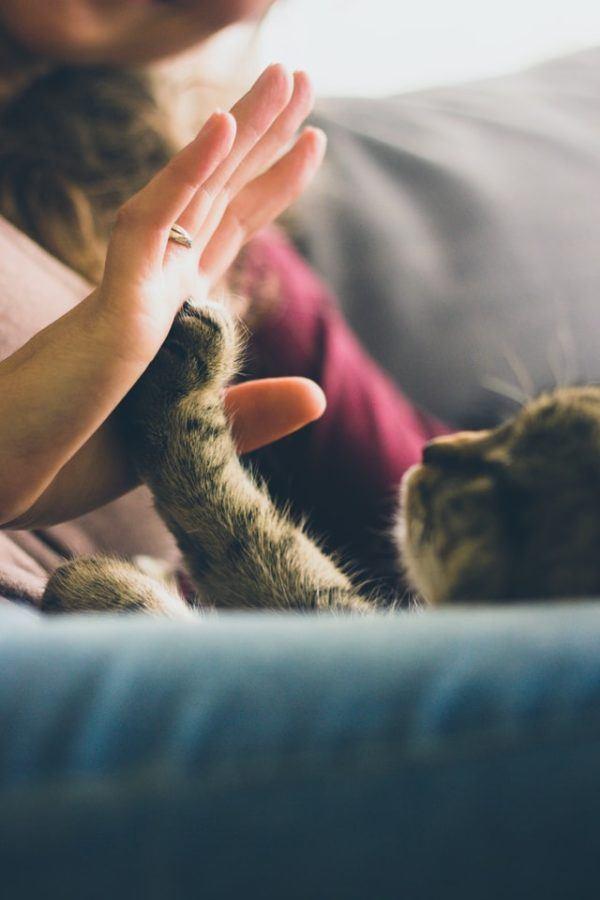 Los 10 trucos más inteligentes para gatos choca esos cinco