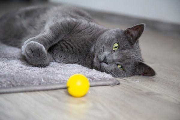 Los 10 trucos más inteligentes para gatos juguete