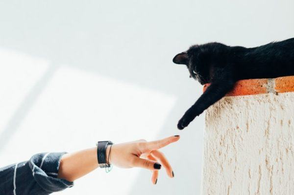 Los 10 trucos más inteligentes para gatos saludo