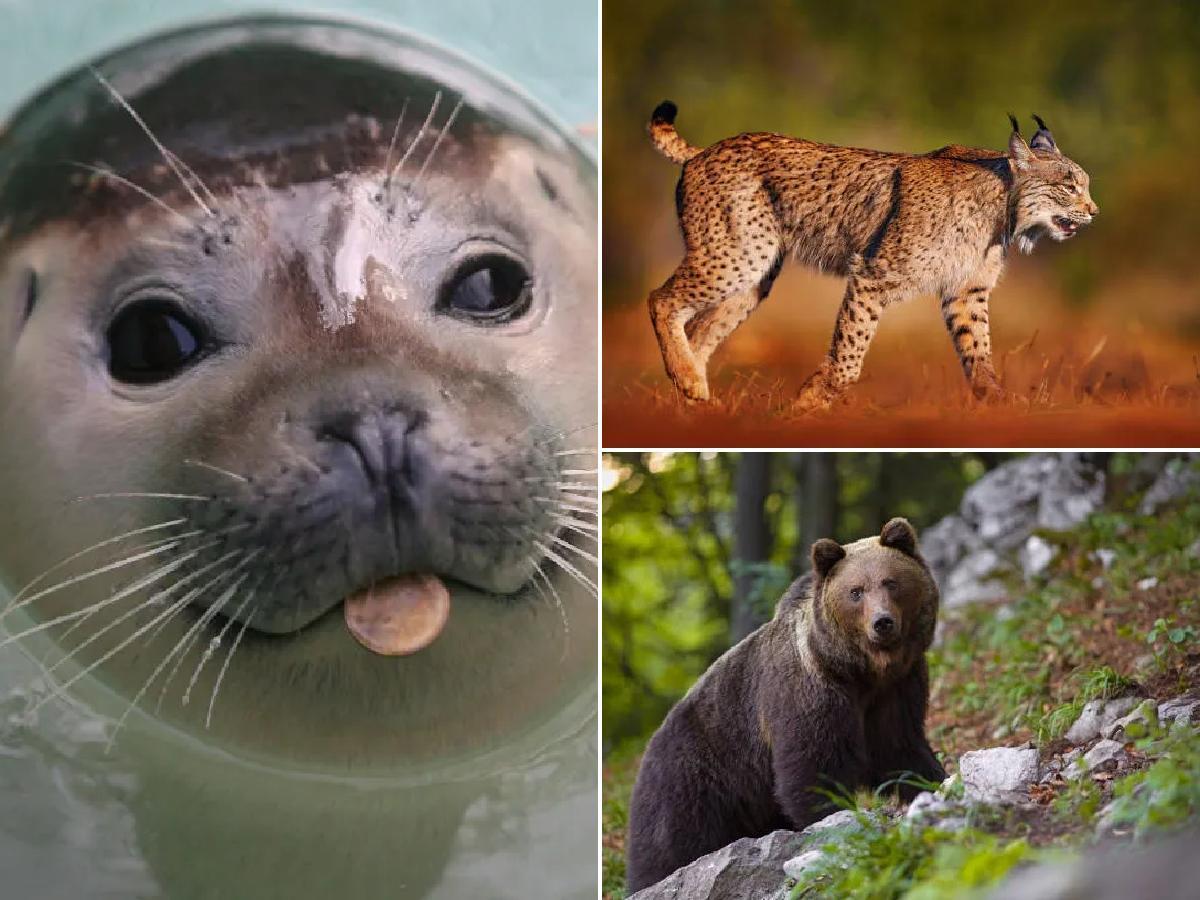 ¿Cuáles son las razas de animales protegidas en España?