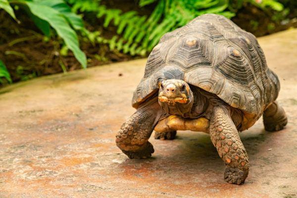Ideas nombres tortugas femeninos