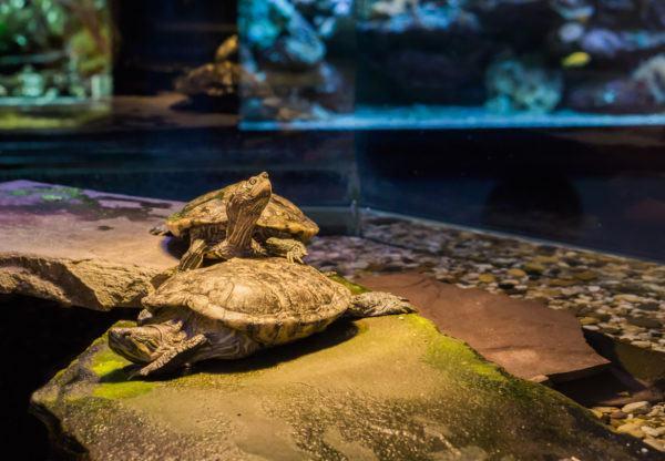 Ideas nombres tortugas  1