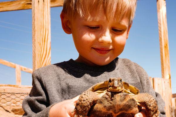 Ideas nombres tortugas