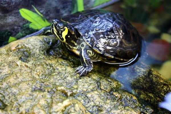 Ideas nombres tortugas masculinos
