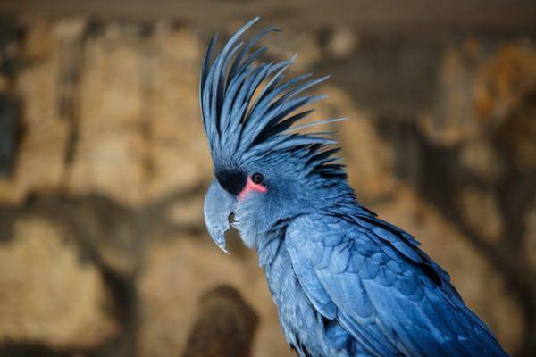 Los nombres mas exóticos para las ninfas azul