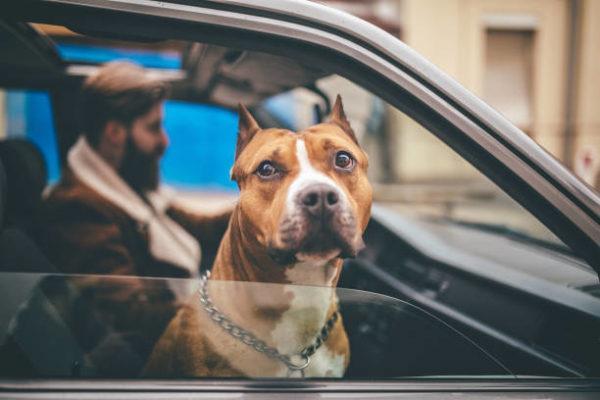 Los perros peligrosos o ppt que son cuales son los requisitos para poder tener uno y cual es el listado de perros peligrosos en espana en 2022