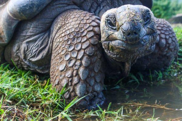 ¿Qué animales viven en el Rio Nilo? Tortuga