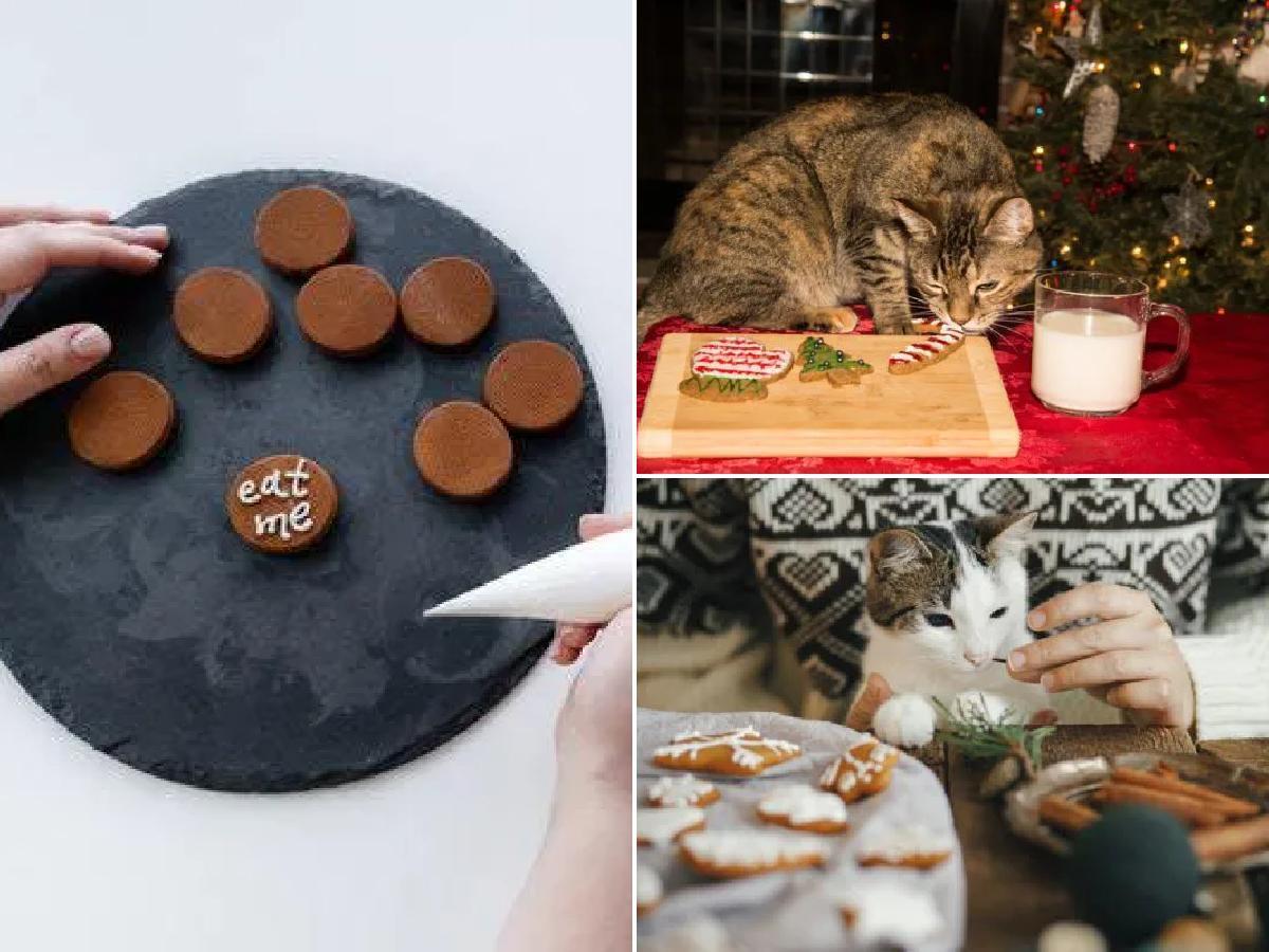 Comidas de Navidad para gatos: ideas originales que sí pueden comer