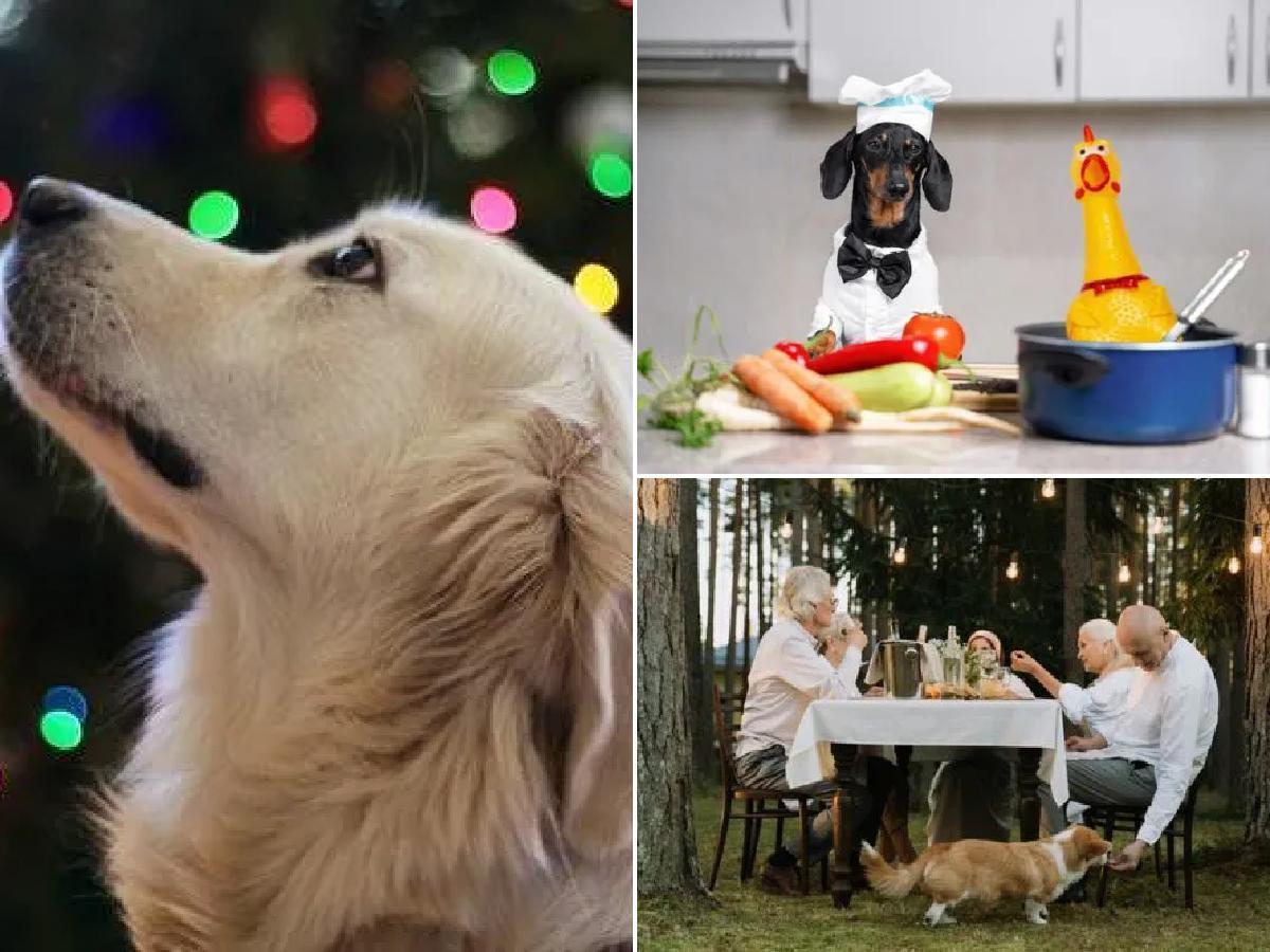 Comidas de Navidad para perros: ideas originales que sí pueden comer