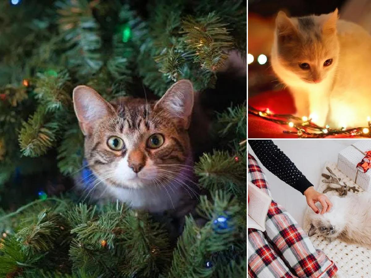 Cómo celebrar la Navidad con tu gato: ideas y consejos portada