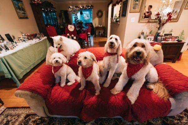 Cómo celebrar la Navidad con tu perro: ideas y consejos familias