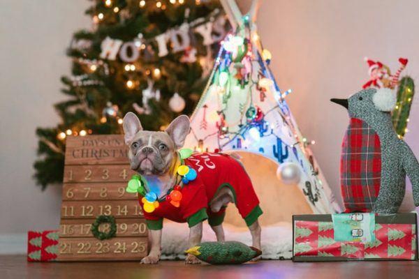 Cómo celebrar la Navidad con tu perro: ideas y consejos árbol